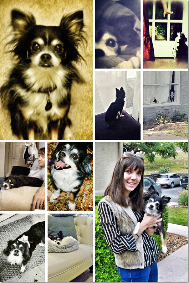 bravo dog collage